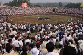 Lễ hội chọi Trâu xã Hải Lựu